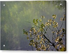 Acrylic Print featuring the photograph Blossom Reflection by Marilyn Wilson