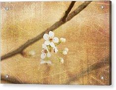 Blossom Acrylic Print by Sofia Walker
