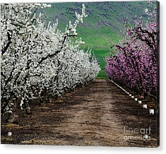 Blossom Standoff Acrylic Print