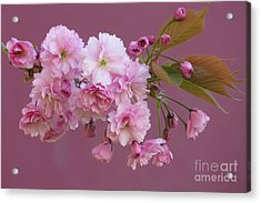 Blossom Standouts Acrylic Print by Frank Townsley