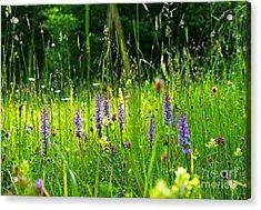 Acrylic Print featuring the photograph Blossom Summer Meadow by Kennerth and Birgitta Kullman