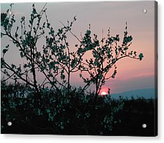 Blossom Sunset Acrylic Print by Dorothy Berry-Lound