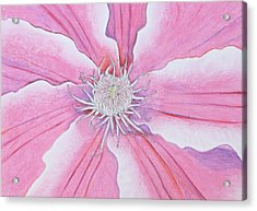 Blossom Acrylic Print by Sven Fischer