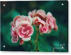 Blossom Acrylic Print by Yew Kwang