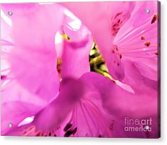 Acrylic Print featuring the photograph Blossoming Beauty by Robyn King