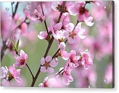 Blossoming Hillside Acrylic Print by Melanie Moraga