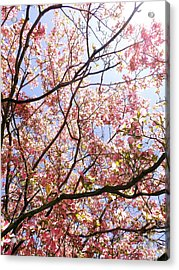 Blossoming Pink Acrylic Print