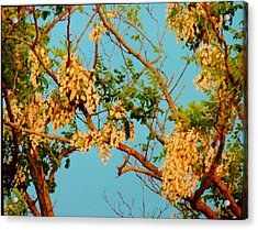Blossoms 1 Acrylic Print by Stephanie Kendall