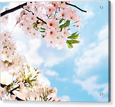 Blossoms Against Sky, Selective Focus Acrylic Print by Panoramic Images
