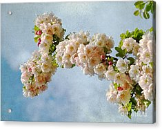 Blossoms And Clouds Acrylic Print