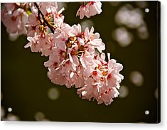 Blossoms And Petals Acrylic Print by Kathi Isserman