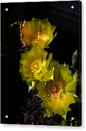 Blossoms At Dusk Acrylic Print by Nick Kloepping