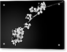 Acrylic Print featuring the photograph Blossoms In Black And White by Joshua Minso