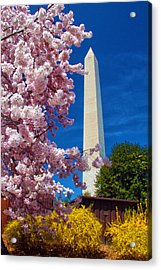 Blossoms Acrylic Print by Mitch Cat