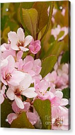 Blossoms Of The Rain Acrylic Print