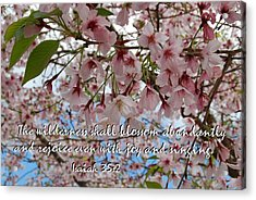 Acrylic Print featuring the photograph Blossoms Rejoice by Jocelyn Friis
