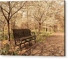 Blossoms  Acrylic Print by Scott Rackers