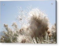 Acrylic Print featuring the photograph Blow Me Away by Julie Lueders