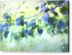 Blowin' In The Wind Acrylic Print by Theresa Tahara