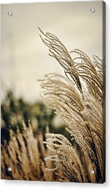 Blowing In The Wind Acrylic Print by Heather Applegate