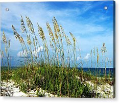 Blowing In The Wind Acrylic Print by Mel Steinhauer