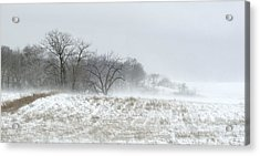 Blowing Snow Over Fields And Forest Acrylic Print