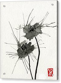 Blown Poppies Acrylic Print