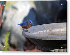 Blue And Brown Acrylic Print