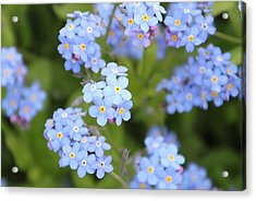Acrylic Print featuring the photograph Blue And Green by Elizabeth Lock