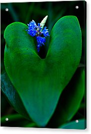 Blue And Green Acrylic Print
