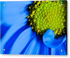 Acrylic Print featuring the photograph Blue And Yellow by Erin Kohlenberg