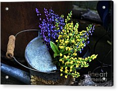 Blue And Yellow Flowers Acrylic Print by Mary Machare