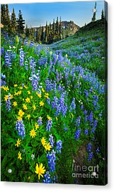 Blue And Yellow Hillside Acrylic Print by Inge Johnsson