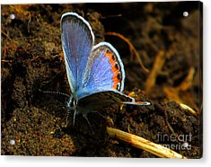 Blue Angel Acrylic Print by Janice Westerberg