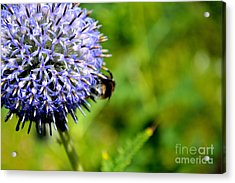Acrylic Print featuring the photograph Blue Ball Flower by Scott Lyons