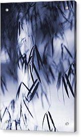Blue Bamboo Acrylic Print