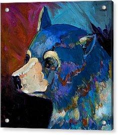 Blue Bear II Acrylic Print by Bob Coonts