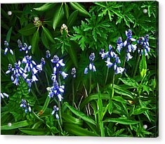 Blue Bells Acrylic Print by Aimee L Maher Photography and Art Visit ALMGallerydotcom