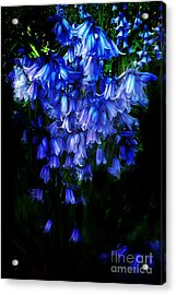 Blue Bells Acrylic Print by Scott Allison