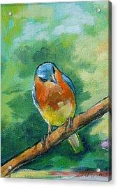 Blue Bird 1 Acrylic Print