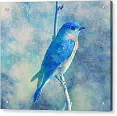 Blue Bird Blue Sky Acrylic Print