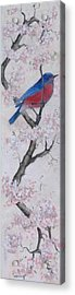 Blue Bird In Cherry Blossoms 2 Acrylic Print by Sandy Clift
