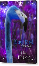 Acrylic Print featuring the photograph Blue Bird Of Paradise - The Fuzz by Barbara MacPhail