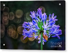 Blue Blooms Acrylic Print by Marvin Spates