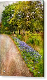 Blue Bonnet Path Acrylic Print