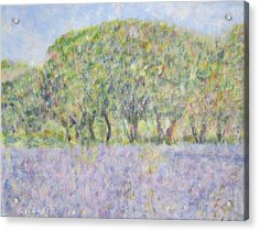Blue Bonnets  Field In  Texas Acrylic Print