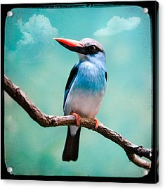 Acrylic Print featuring the photograph Blue Breasted Kingfisher by Gary Heller