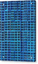 Blue Brick Wall Acrylic Print by Carlos Caetano