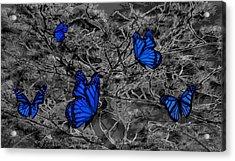 Blue Butterflies 2 Acrylic Print by Barbara St Jean
