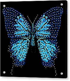 Blue Butterfly Black Background Acrylic Print by R  Allen Swezey